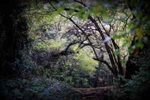 Photography Simon Folkard
